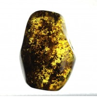 Green Shade Polished Baltic Amber Piece With Plant Inclusions 24g