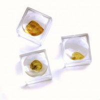 Small Baltic amber piece with insect inclusion in transparent plastic box